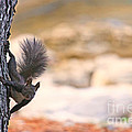Squirrel Sitting On The Tree  by Nino Rasic