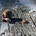 Squirrel Trash by Susan Herber
