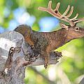 Squirrelk by Shane Bechler