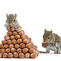 Squirrels And Nut Pyramid by Mark Taylor