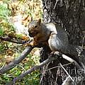 Squirrling Away by Laurel Best