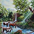 Srb Wild Horses by Susan Herber