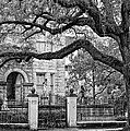 St. Charles Ave. Monochrome by Steve Harrington