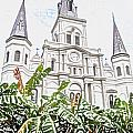 St Louis Cathedral Rising Above Palms Jackson Square New Orleans Colored Pencil Digital Art by Shawn O'Brien