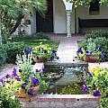 St. Philip's Garden by M Diane Bonaparte