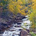 St Vrain Canyon And River Autumn Season Boulder County Colorado by James BO Insogna