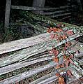 stacked Fence by LeeAnn McLaneGoetz McLaneGoetzStudioLLCcom