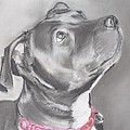 Staffordshire Terrier  by Karl Simpson