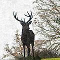 Stag On Hillside by Dawn OConnor