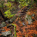 Stairway To The Sky by Karen  W Meyer