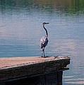 Standing On The Dock by T Campbell