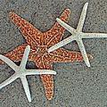 Starfish Three by Sandi OReilly