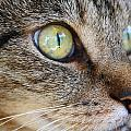 Staring Cat by Catie Canetti