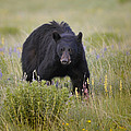 Staring Me Down by Don Wolf