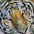 Starry Tiger by Nicholas Evans