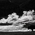 Steaming Bison by Derek Holzapfel