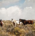 Steens Wild Horses by Steve McKinzie