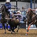 Steer Wrestling  by Elizabeth Hart