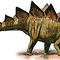Stegosaurus Armatus, A Prehistoric Era by Sergey Krasovskiy