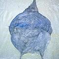 Stellar Jay From  Back by Debbi Saccomanno Chan