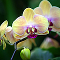 Stem Of Orchids by Randy Harris