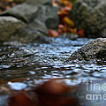 Stepping Stone by Susan Herber