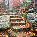Steps Cloudland Canyon by Tom and Pat Cory
