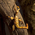 Stick Insect by Isabel Poulin