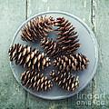 stil life with  seven pine cones by Priska Wettstein