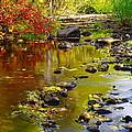 Still Golden Waters by Jeff Swan