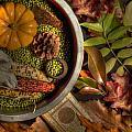 Still Life In Autumn by VJ Lair