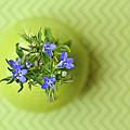 Still Life In Delicate Green by Natalia Ganelin