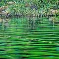 Still Waters by Usha Shantharam