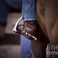 Stockhorse And Spurs by Michelle Wrighton