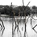 Stomps Of Trees In A Lake by Sumit Mehndiratta