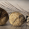 stone fish - A a peacock feather and four pebbles become a sea creature in artist mind by Pedro Cardona Llambias