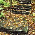 Stone Stairway In Forest, Cape Breton by Bilderbuch