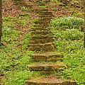 Stone Step Trail 1 by John Brueske