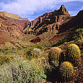 Stonecreek Canyon In The Grand Canyon by David Edwards