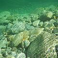 Stones Under The Water by Mats Silvan