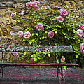 Stop And Smell The Roses by Debra and Dave Vanderlaan