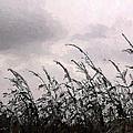 Storm A'comin' by Jerry Hellinga