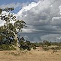 Storm Clouds by Richard Verkuyl