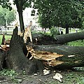 Storm Damage by Ria Novosti