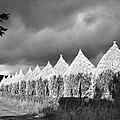 Storm Light On Grain Stacks Not Far by Maynard Owen Williams