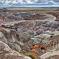 Stormy Morning At Petrified Forest  by Sandra Bronstein