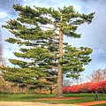 Strangely Shaped Tree At Cincinnati Observatory by Jeremy Lankford