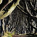 Stranocum, Co. Antrim, Ireland by The Irish Image Collection
