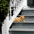 Stratford Cat Nap by Melissa A Benson