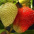 Strawberries by Jim Sauchyn